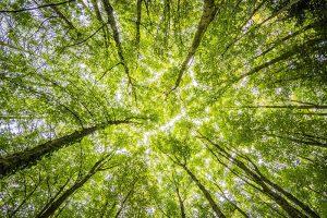 45ème journée mondiale de l'environnement